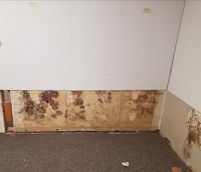 Mold Remediation Free Continuing Education Class- Understanding Mold in the Restoration Industry