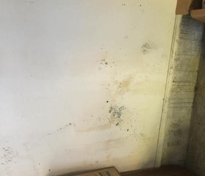 Mold Remediation Mold is nearly everywhere. Is that a problem?