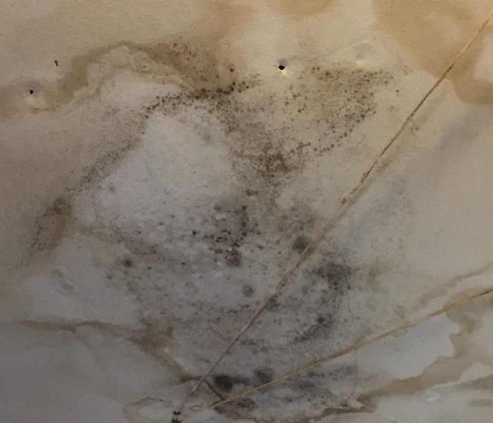 Mold Remediation Broken Arrow Roof Leak Creates Mold Risk